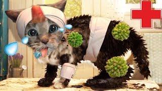 ПРИКЛЮЧЕНИЕ МАЛЕНЬКОГО КОТЕНКА мультфильм про котят мультик для детей и малышей на #ММ