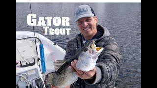 GIANT Gator Speckled Trout in the Winter - ft. Top winter baits, lures and HOW TO