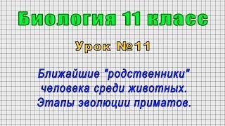 Биология 11 класс Урок 11