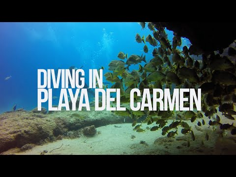 Scuba Diving in Playa Del Carmen – Mexico (Drift dive) – 2015