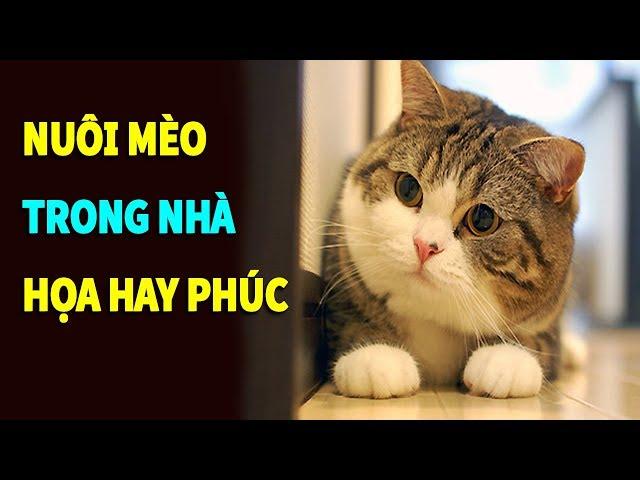 Sự thật nuôi mèo trong nhà là HỌA hay PHÚC