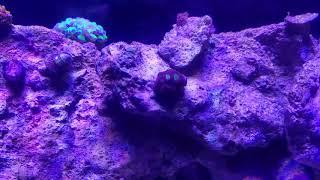 20 long with 165 watt Marsaqua, aquamaxx hob, and hob refugium