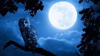 Sleep Music 24/7, Calm Music, Insomnia, Meditation Music, Spa Music, Sleep, Relax, Sleep Meditation