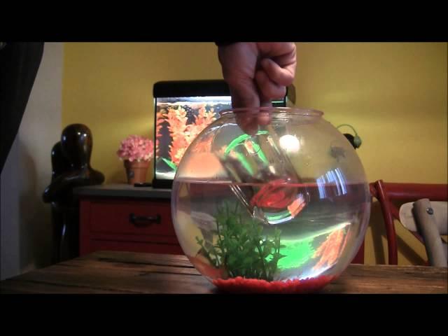 Come spostare il pesce rosso dalla boccia all'acquario