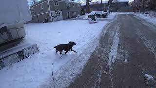 С собаками по свежему снегу 4К