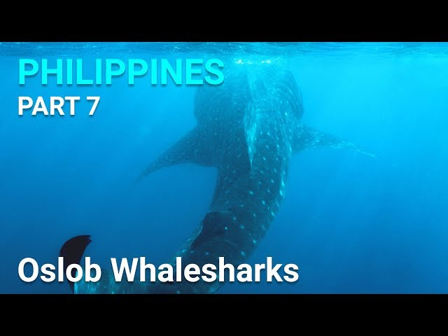 Oslob Whaleshark Encounter - Philippines, Cebu - Part 7
