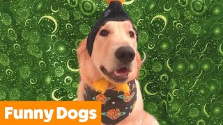 Cutest Silly Dogs | Funny Pet Videos