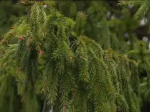 Деревья памятники живой природы  Республика Татарстан 2014 год