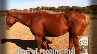 University Experts Discuss Trials with Purina® Equine Senior® horse feed