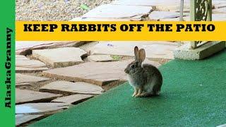 Keep Rabbits Off Patio Rabbit Poop Solutions Repellent