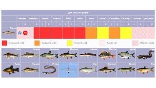 Рыбацкий календарь на неделю в волгограде
