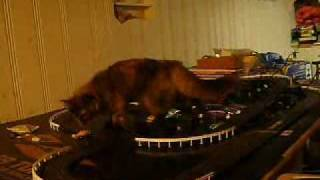 Cat vs. Slot Car