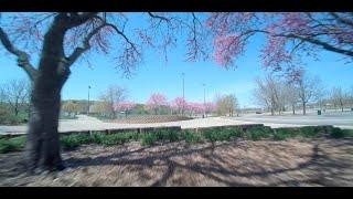 FPV Freestyle - Spring is Pretty - Kiss Fettec ImpulseRC Apex Ethix P3 PBJ T-Motor F40 IV Pro