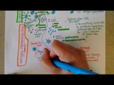 Herbal medicine laban sa parasites