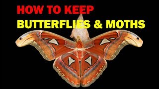 How to keep  Butterflies and Moths (Weird and Wonderful Pets Episode 4 of 15)