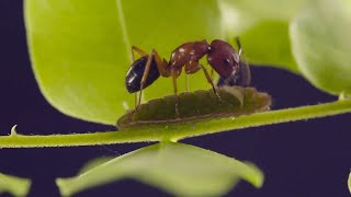 Ants and Blues: The Feeling is Mutual