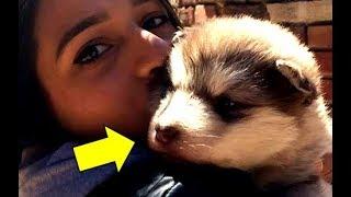 Она подобрала этого щеночка, не подозревая об опасности которая её поджидала