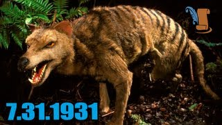 Today In History: The Tasmanian Tiger