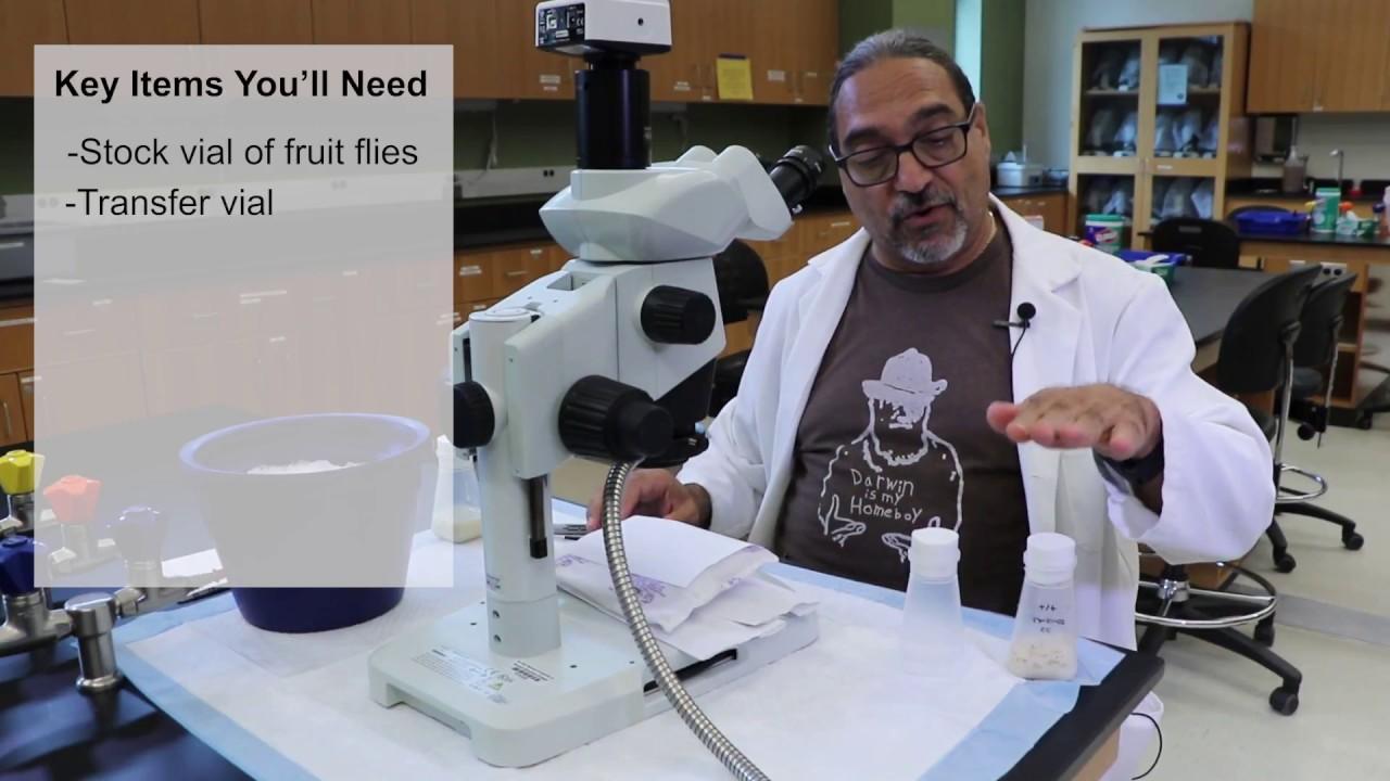 Fruit Fly Experiment   Stockton University (produced, filmed, edited)