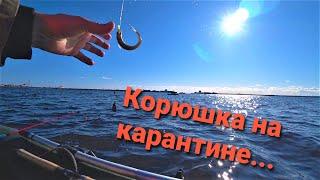 Запрет ловли финский залив 2020