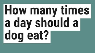 How many times a day should a dog eat?
