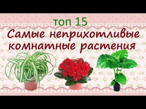Самые неприхотливые растения для дома//ТОП15