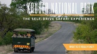 What It's Like to Safari at Kruger National Park in South Africa | A Travel Guide