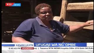 Ufugaji wa ng'ombe wa maziwa | KILIMO BORA