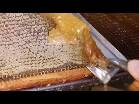 Cura delleczema umido diventante in un inguine