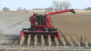 Corn Belt Harvest