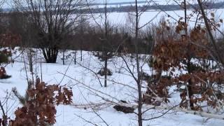 Смотреть онлайн Охота с эстонскими гончими на зайца