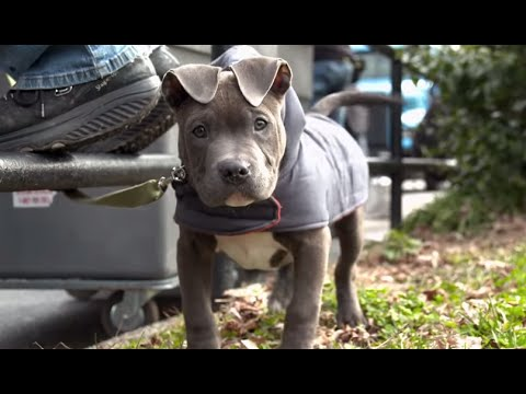 The Drop (Featurette 'Rocco the Dog')