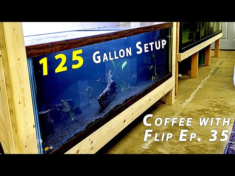 Talking about Setting up a 125 Gallon for Baby Shrimp - Coffee with Flip Ep. 35