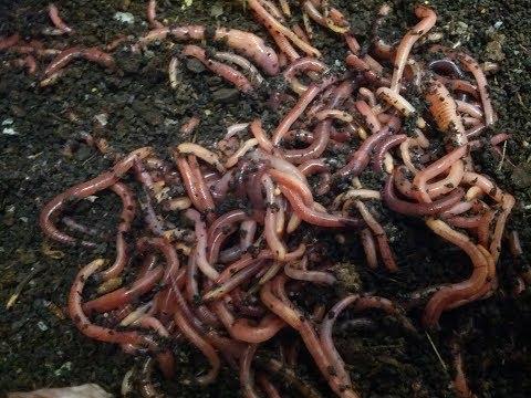 Das Foto des Formulars auf die Eier der Wurm