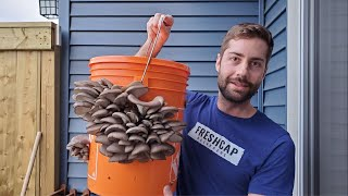 Grow Mushrooms at Home In A 5 Gallon Bucket