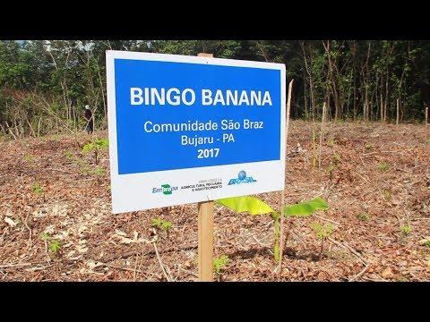 Bingo banana