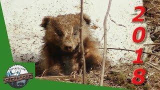 Лесными тропами.  Видео встречи с животными 2018.