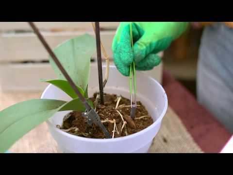 Hogyan és hány pinwormot kezelnek