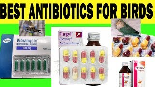 Best antibiotics for birds | budgie | cocktail | Java | Medicines for Cold Chest and Eye infection
