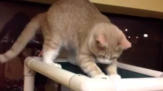 Jeremy, Cats Cradle Shelter Fargo, ND being a funny boy