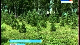Житель Юрги пытается восстановить леса