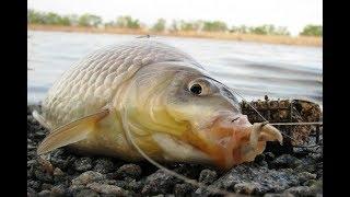 Рыбалка карась снасти соски