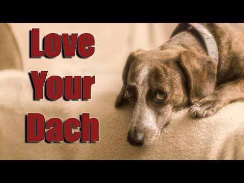 Beautiful Dachshund Howls At YouTube Dogs (Please Spay Your Pets)