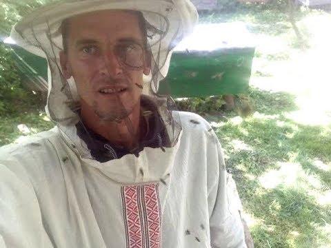 Добрые пчёлы Карпатка просто ЖЕСТЬ !!!