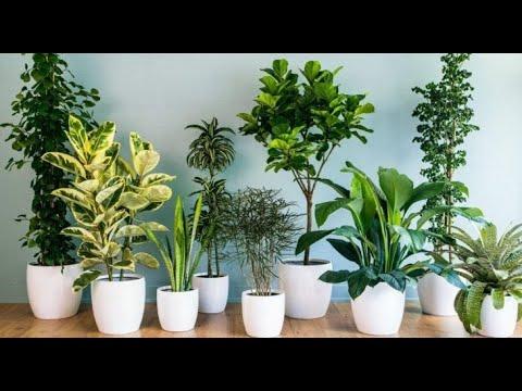 Не простая зелень! Комнатные растения, которые приносят в дом деньги и благополучие семьи