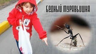 Бедный муравьишка