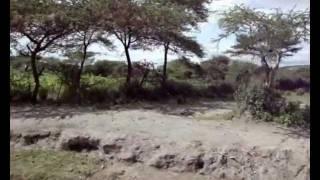 Abidjatta Shalla National Park Ethiopia Africa