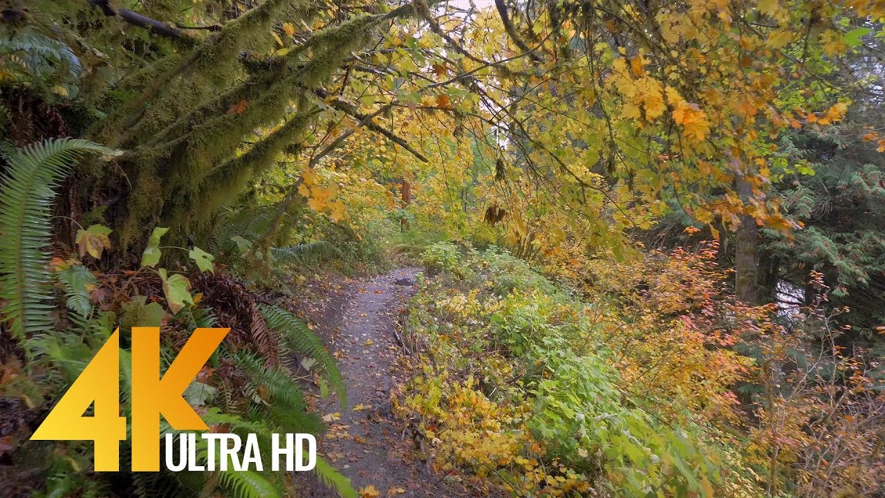 YouTube Autumn Forest Walk video thumbnail