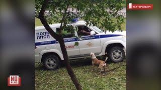 Полицейские застрелили собаку