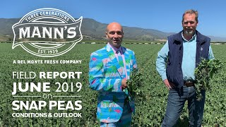 Field Report | June 2019 - Snap Peas Conditions & Outlook